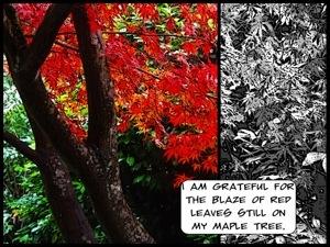 Gratitude day 5 – a blaze of red