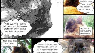 """Day 2: Introducing """"Graticat"""""""